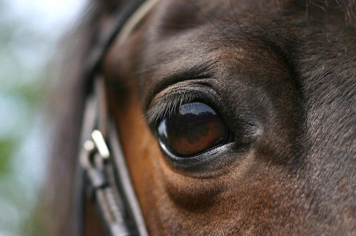 Pension pour chevaux et sous location