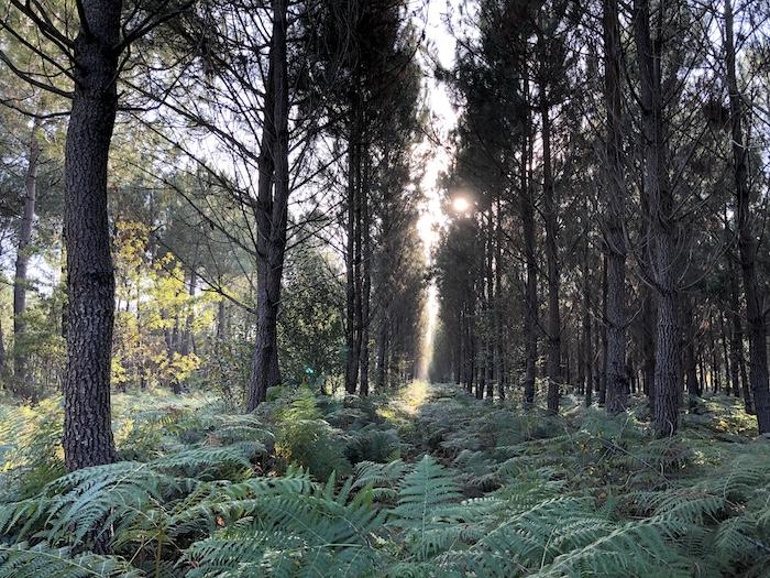 Exoneration des droits de mutation à titre gratuit des bois et foret